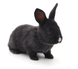 Black rabbit.