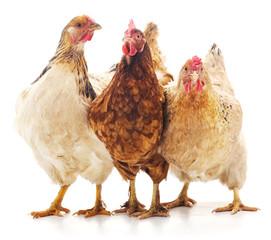Trzy brązowe kurczaka.