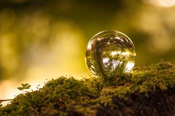 Glaskugel auf Moos spiegelt den Wald