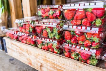 Closeup of many strawberries in plastic boxes on display in wooden crate