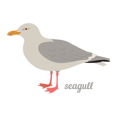 Colorful illustration of seagull. Vector bird icon. Isolated on white background. Flat design.