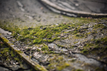 Macro picture of green moss. Close up macro photography of nature. Color bright background with amazing bokeh. moss lichen background on the grungy cement wall texture.
