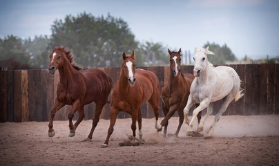 4 Horses Running In Corral