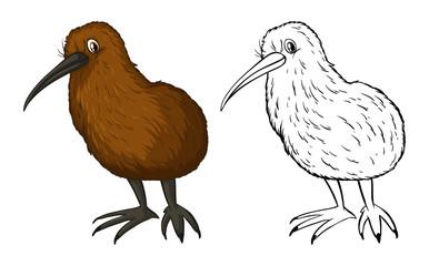 Doodle animal for kiwi bird