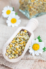 Dry chamomile tea in wooden scoop, fresh chamomile flowers and glass jar on background, vertical