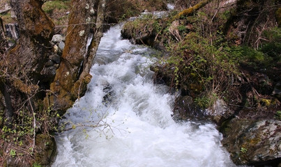 Mountain stream among trees and grass in spring.