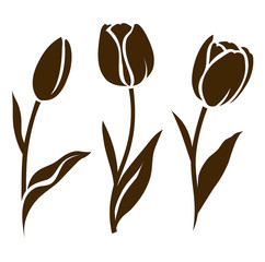 Set of tulip silhouette. Vector illustration. Collection of decorative flowers