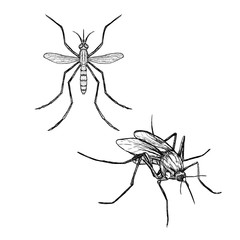 Hand drawn set of mosquito. Realistic sketches. Vector illustration.