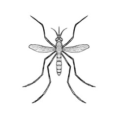 Hand drawn sketch of mosquito. Top view. Vector illustration.