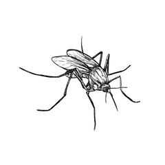 Hand drawn sketch of mosquito. Vector illustration.