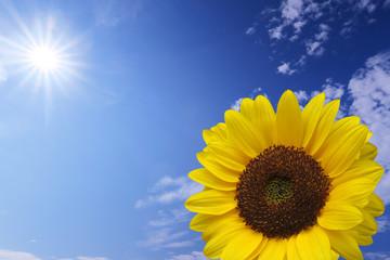 sun flower summer sky