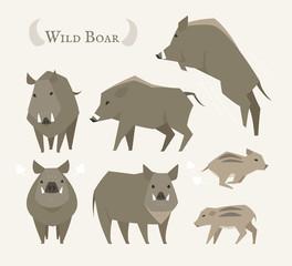 wild boar animal vector illustration flat design