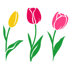 Set of colorful tulip silhouette. Vector illustration. Collection of decorative flowers