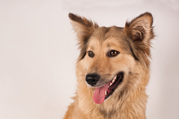 Portrait of mixed breed dog