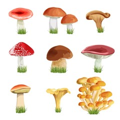 set of nine mushrooms with grass