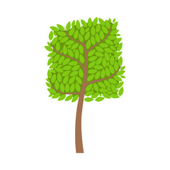 Tree with a square crown and green leaves, element of a landscape. Colorful cartoon vector Illustration