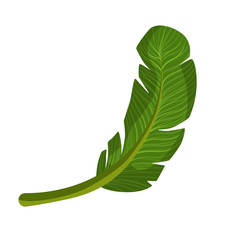 Exotic palm green leaf. Colorful cartoon vector Illustration