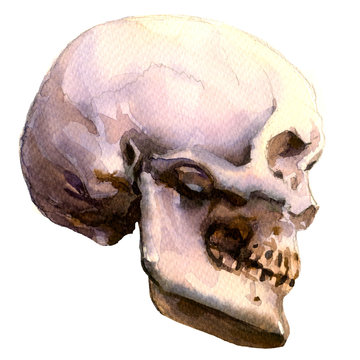 Anatomic human skull, side view, isolated, watercolor illustration on white
