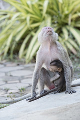 Mother monkey and baby monkey