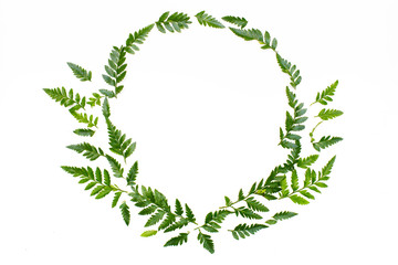Wreath frame of green leaves on white background. Flat lay, top view. Copy space. Concept of summer