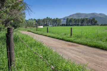 Farm dirt road in between two fence lines, green alfalfa grass fields with pine trees and mountains in background on a bright sunny day