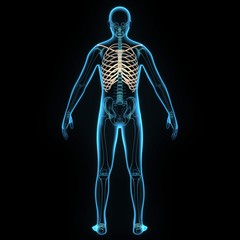3d illustration human body ribs cage