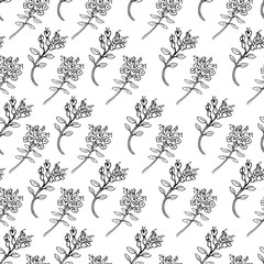 Seamless vector herbal pattern, Hand drawn Thyme branch with leaves sketch isolated on color background, Healing herb, Botanical Illustration, Design for wallpaper, textiles, packaging, organic food