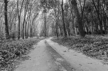 way to forest in black and white