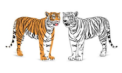 Tiger silhouette illustration. Wild life animals. isolated on  white background.