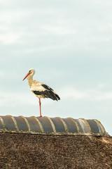 White stork resting on a farm roof