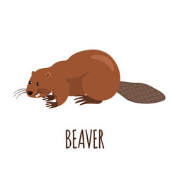 Funny beaver in flat style.