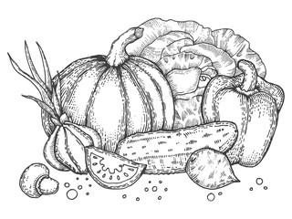 Vegetables engraving style vector illustration