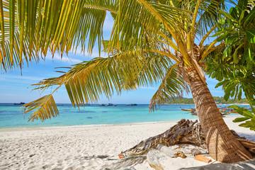 Palm on a beautiful tropical beach, Thailand.