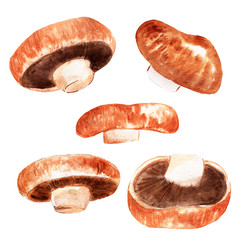 watercolor illustration of mushrooms on white