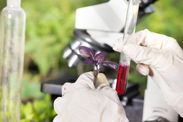 Biologist holding red basil sprout and test tube
