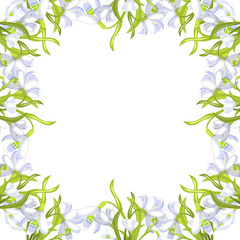 snowdrop flower blossomed with leaves.  illustration