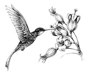 Hummingbird in flight drawing