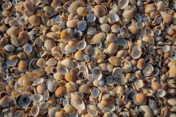 Peninsula Crimea, the coast of the Azov Sea. The beach is covered with multicolored shells of shellfish.