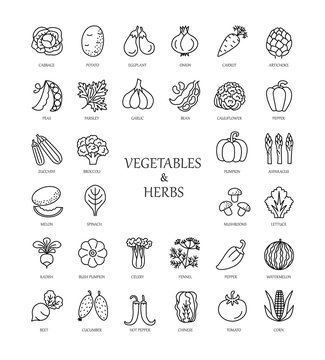 Vector line icons with vegetables and herbs.