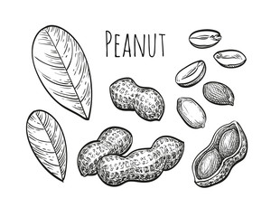Peanut sketch set