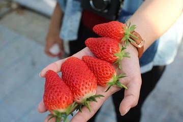 大きなイチゴたち