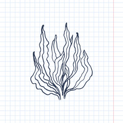 seaweed vector sketch
