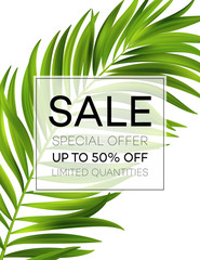 Sale banner or poster with palm leaves and jungle leaf. Floral tropical summer background. Vector illustration