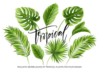 Tropical palm leaves set isolated on white background. Vector illustration Wall mural