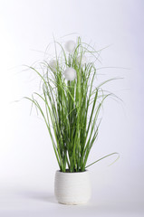 Green plant in white pot and white background