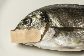 A dead fish with a patch on its mouth. Symbolic close-up shot: mute as a, censorship, privacy.
