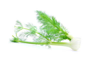 Fennel isolated on white background