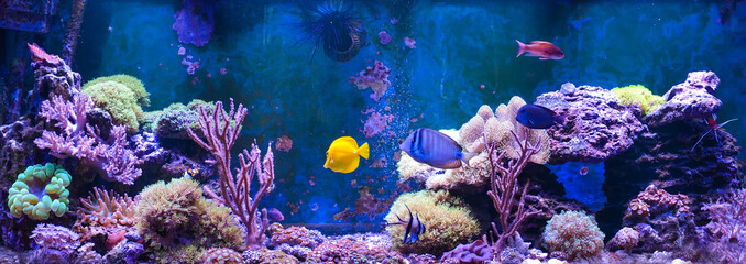 Foto op Canvas Onder water Reef tank, marine aquarium. Blue aquarium full of plants. Tank filled with water for keeping live underwater animals. Gorgonaria, Sea Fan. Clavularia. Zoanthus. Zebra apogon. Zebrasoma. Percula.