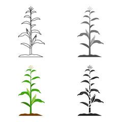 Corn icon cartoon. Single plant icon from the big farm, garden, agriculture cartoon.