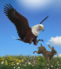 Eagle Hunting Rabbit